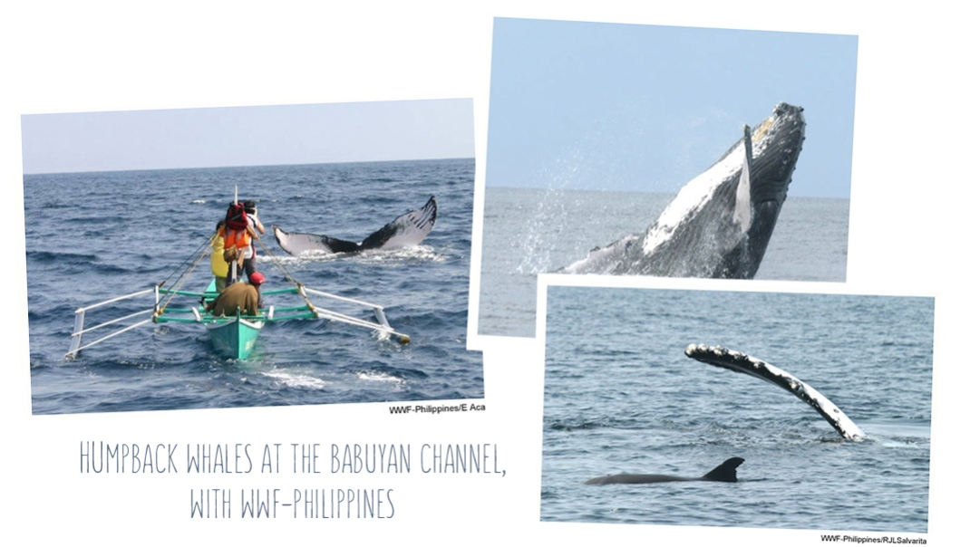 whales uluru elle divine 05